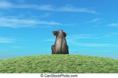 Elephant sits atop a hill