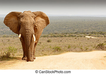 Elephant standing in the dirt road