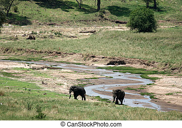 elephant., tanzanie, afrique