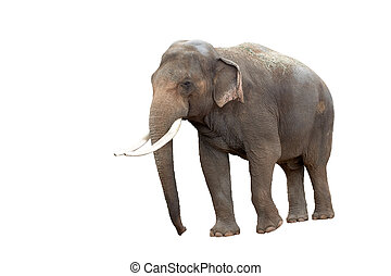 Elephant that has been isolated