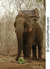 The elephant in the forest in Southeast Asia
