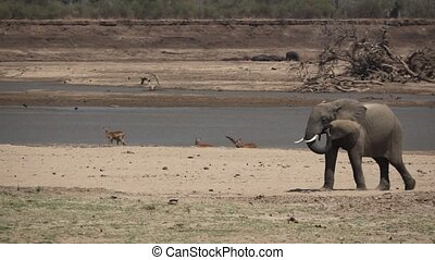 Elephant throws sand in super slow motion