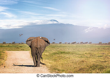Elephant Walking Away to Mt Kilimanjaro