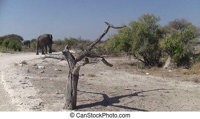 Elephant Walking in Etosha NP Landscape