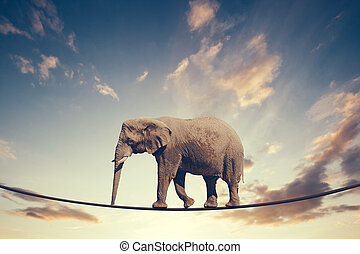 Elephant walking on a line on the sky background.