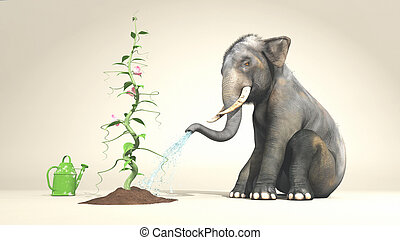 Elephant watering a plant