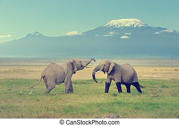 Elephant with Mount Kilimanjaro