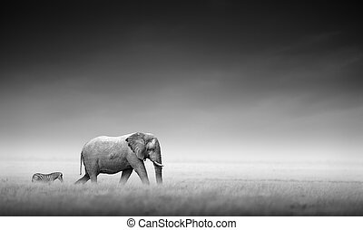 Elephant with zebra (Artistic processing) - Elephant with...