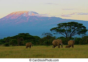 Elephants and Kilimanjaro - Elephant herd in front of Mt. ...