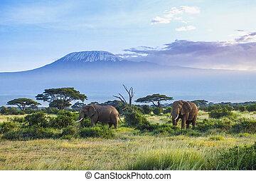 Elephants and Kilimanjaro  in the setting sun