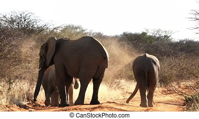 Elephants are seen throwing dirt upon their backs for sun...