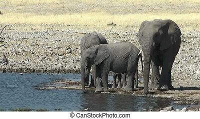 elephants arriving at waterhole