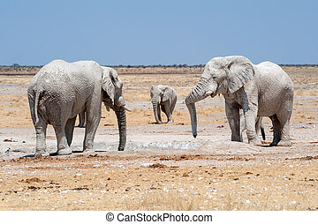 elephants at a waterhole namibia