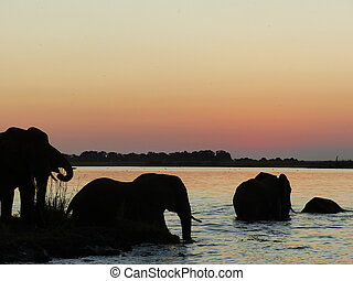 Elephant's bath in the evening