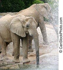 Elephants drinking near a waterfall