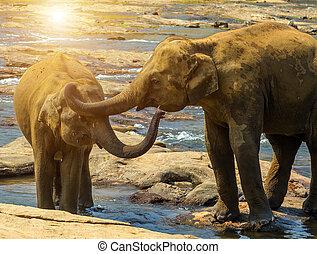 Elephants family bathing in river