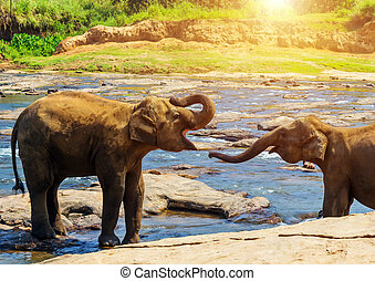 Elephants family deep forest river