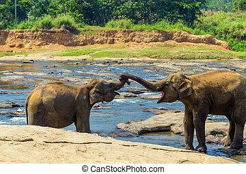 Elephants family river