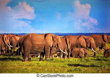 Elephants herd on savanna. Safari in Amboseli, Kenya, Africa...