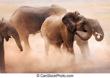 Elephants in dust - Disturbed elephants creating a lot of...