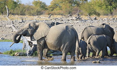 Elephants in Etosha - Mom and baby elephants getting out of...