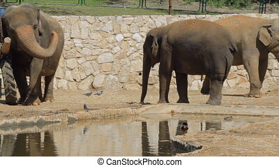 Elephants in the safari. Israel