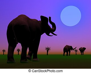 Elephants in the savannah by night