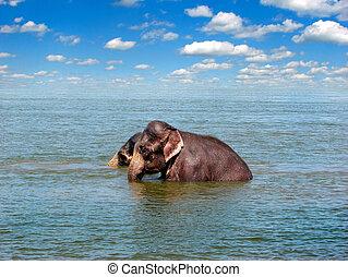 elephants in the sea