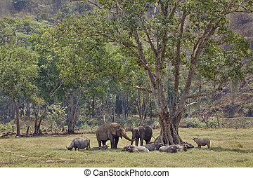 Elephants in the shade of a tree.