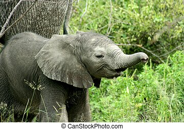 Elephants in Zambia National Park