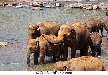 Elephants on Sri Lanka - Elephants  on Sri Lanka