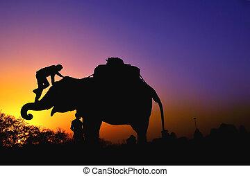 Elephants on sunset
