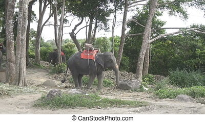Elephants on the hill in Phuket - Beautiful elephants on the...