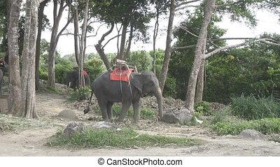 Elephants on the hill in Phuket - Beautiful elephants on the...