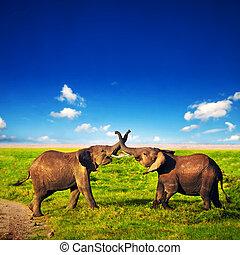 Elephants playing on savanna. Safari in Amboseli, Kenya, Africa