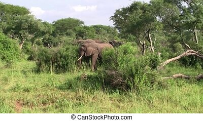 Elephants Standing in the Green Bush