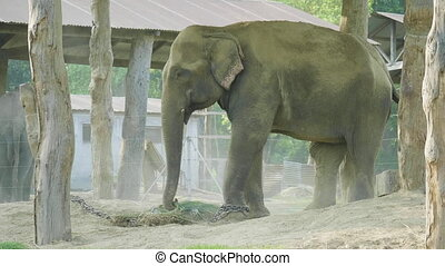 Elephants takes shower of dust in the farm of national park Chitwan, Nepal.