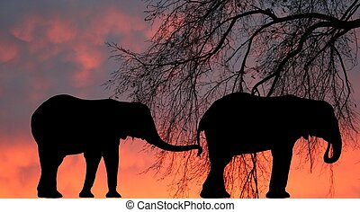 Two elephant silhouettes against a sunset or sunrise