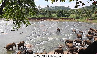 elephants walking along the river in the wild