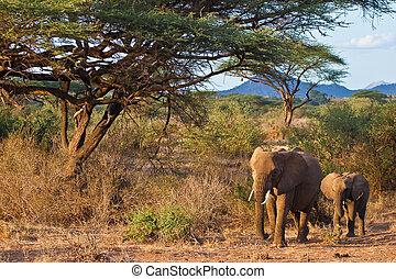 Elephants walking in the bush of africa