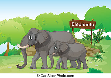 Elephants with a wooden signage at the back