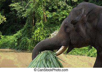 elephants.chang, centro, appendere, distretto, conservazione, thailand., asiatico, chiacchierata, elefante, tailandia, provincia, lampang