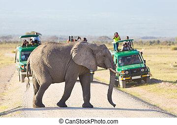 Elephantt crossing dirt roadi in Amboseli, Kenya. - Tourists...