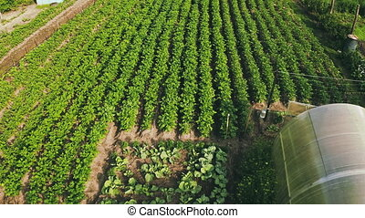 Elevated View Of Vegetable Garden In Small Town Or Village. Potato Plantation And Greenhouse At Summer Evening. Village Garden Beds. 4K.