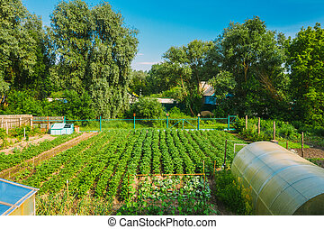 Elevated View Of Vegetable Garden In Small Town Or Village. Potato Plantation And Hothouse At Summer Evening. Village Garden Beds