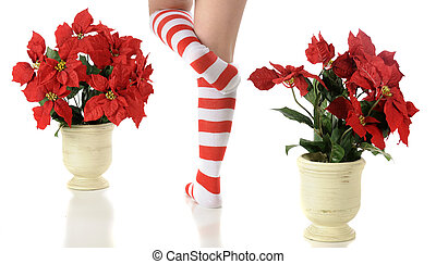 Elf Feet Between Poinsettias