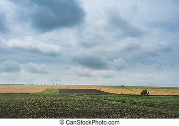 elhomályosul, felett, ég, drámai, zöld, mezőgazdasági, napnyugta, field.