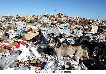 eliminação, desperdício, cão, entulho