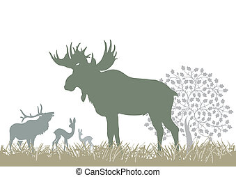 Elk and wild animals