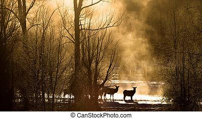 elk crossing misty golden forest